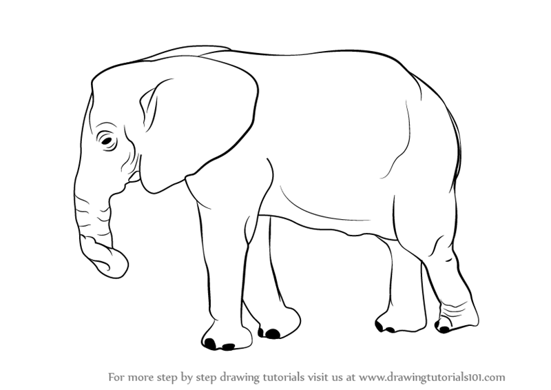 Learn How to Draw an Elephant (Zoo Animals) Step by Step ...