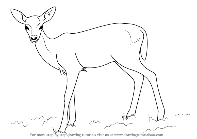 learn how to draw a baby deer aka fawn zoo animals step by step drawing tutorials