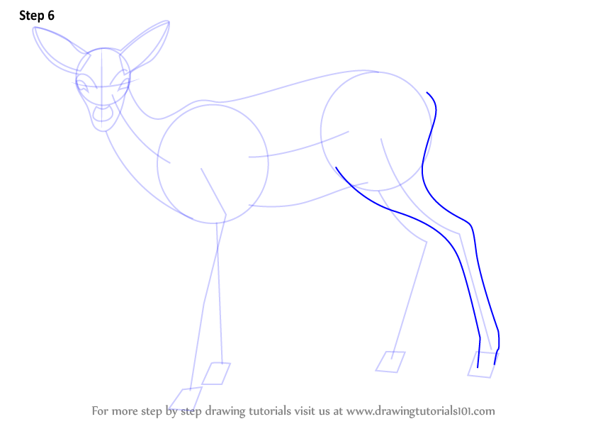 learn how to draw a baby deer aka fawn zoo animals step
