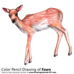 How to Draw a Baby Deer aka Fawn
