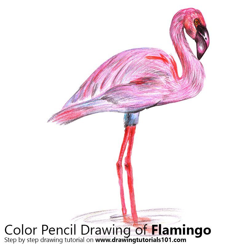 Flamingo Color Pencil Drawing