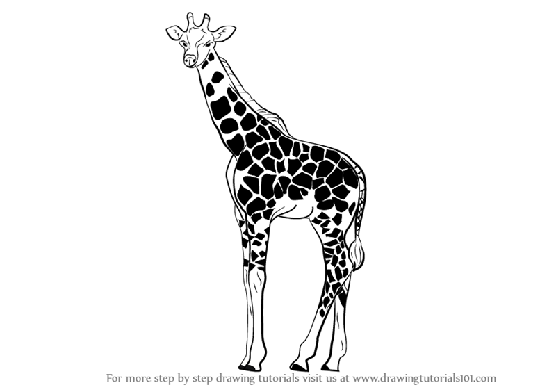 learn how to draw a giraffe zoo animals step by step drawing tutorials