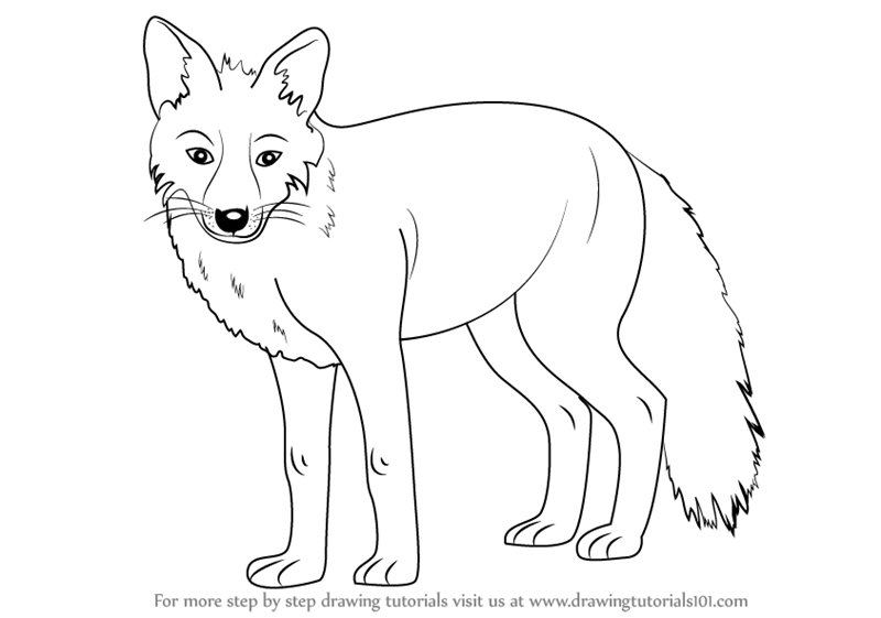 Image of: Cartoon Drawingtutorials101com Learn How To Draw Fox zoo Animals Step By Step Drawing Tutorials