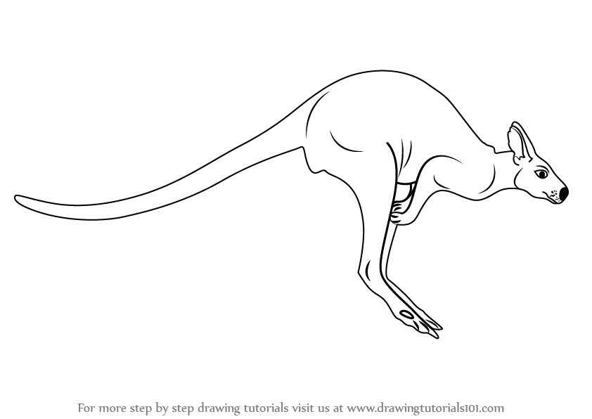 Learn how to draw a kangaroo zoo animals step by step drawing tutorials