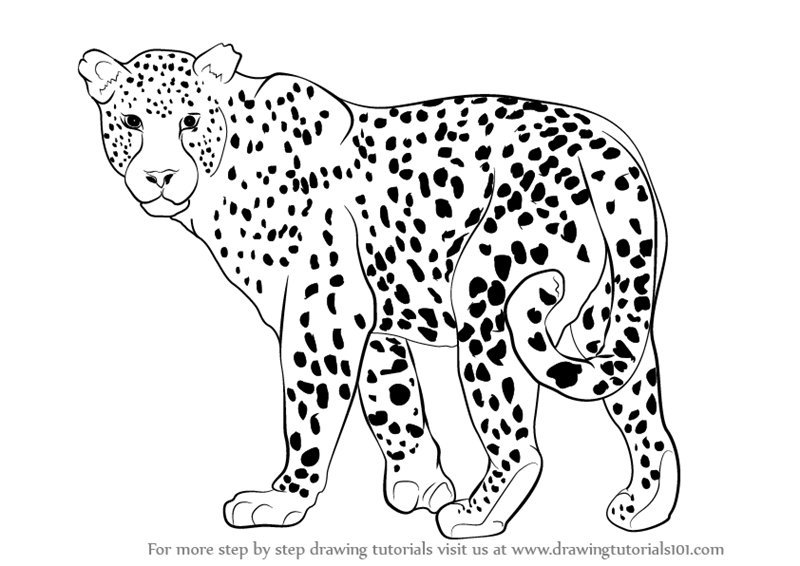 Dibujos Leopardo Para Colorear E Imprimir: Learn How To Draw A Leopard (Zoo Animals) Step By Step
