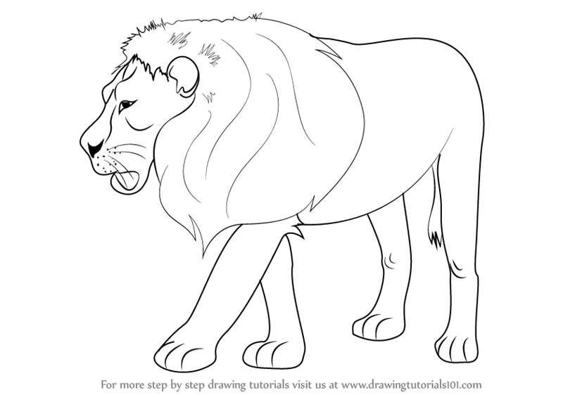 Images Drawingtutorials101com Learn How To Draw Lion zoo Animals Step By Step Drawing Tutorials