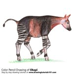 How to Draw a Okapi