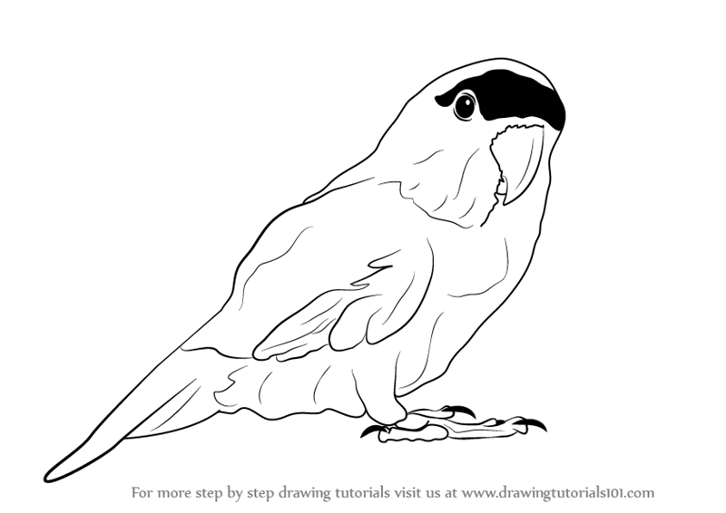 Learn How To Draw A Parrot Zoo Animals Step By Step Drawing