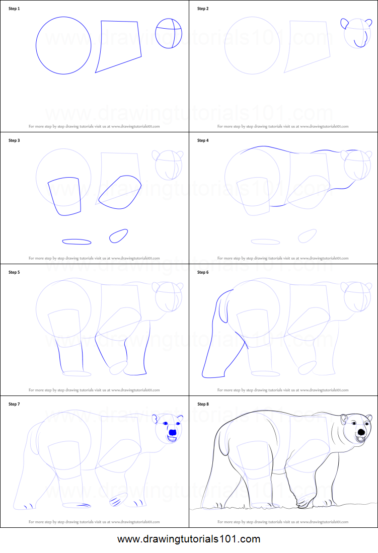 how to draw a polar bear printable step by step drawing sheet