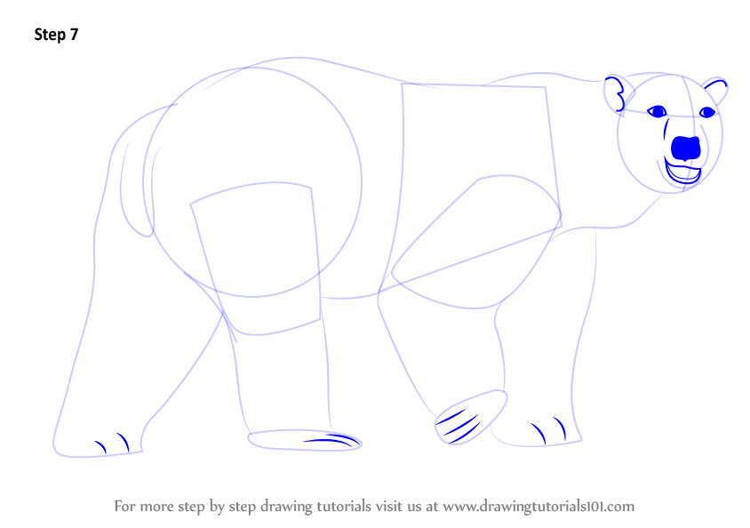 Step by Step How to Draw a Polar
