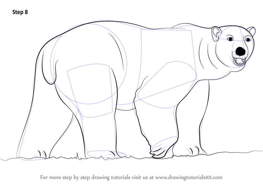 Learn How To Draw A Polar Bear (Zoo Animals) Step By Step
