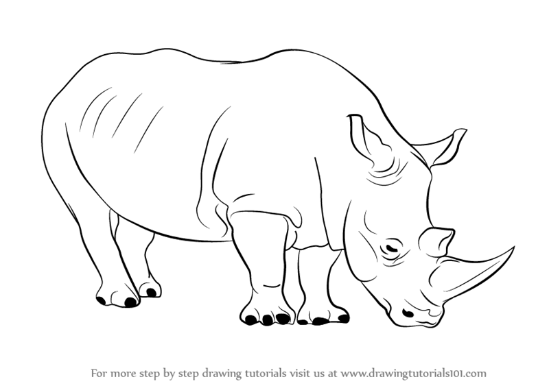 Image of: Coloring Pages Learn How To Draw Rhinoceros zoo Animals Step By Step Drawing Tutorials Drawingtutorials101com Learn How To Draw Rhinoceros zoo Animals Step By Step Drawing