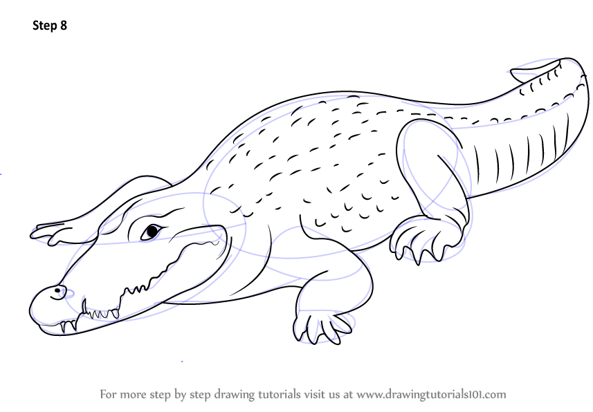 Learn How To Draw A Crocodile Zoo Animals Step By Drawing Tutorials