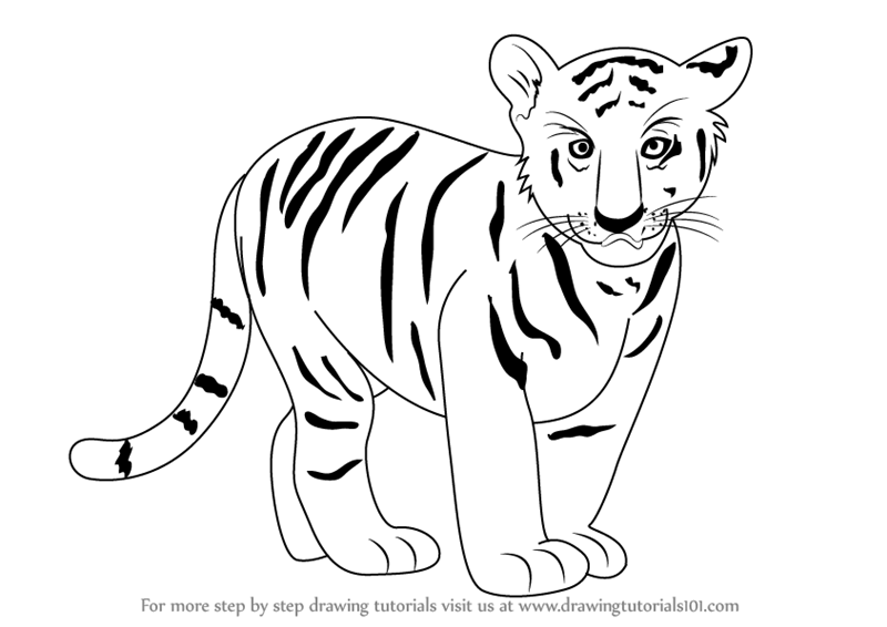 Learn how to draw tiger cub zoo animals step by step drawing tutorials