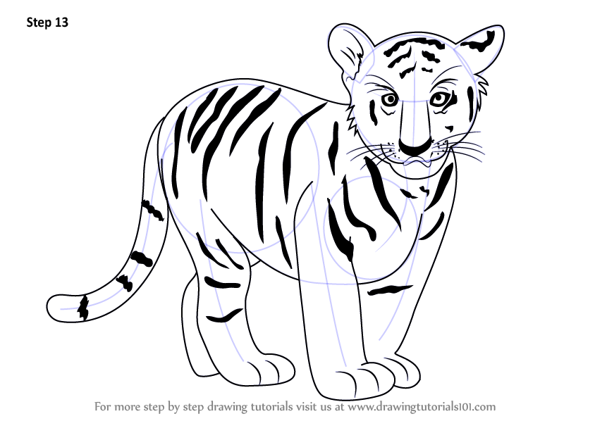 Learn How To Draw Tiger Cub Zoo Animals Step By Step