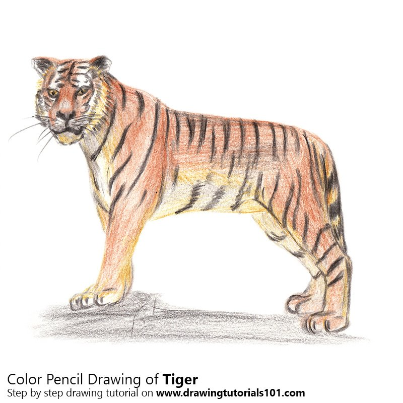 how to draw on wood with colored pencils