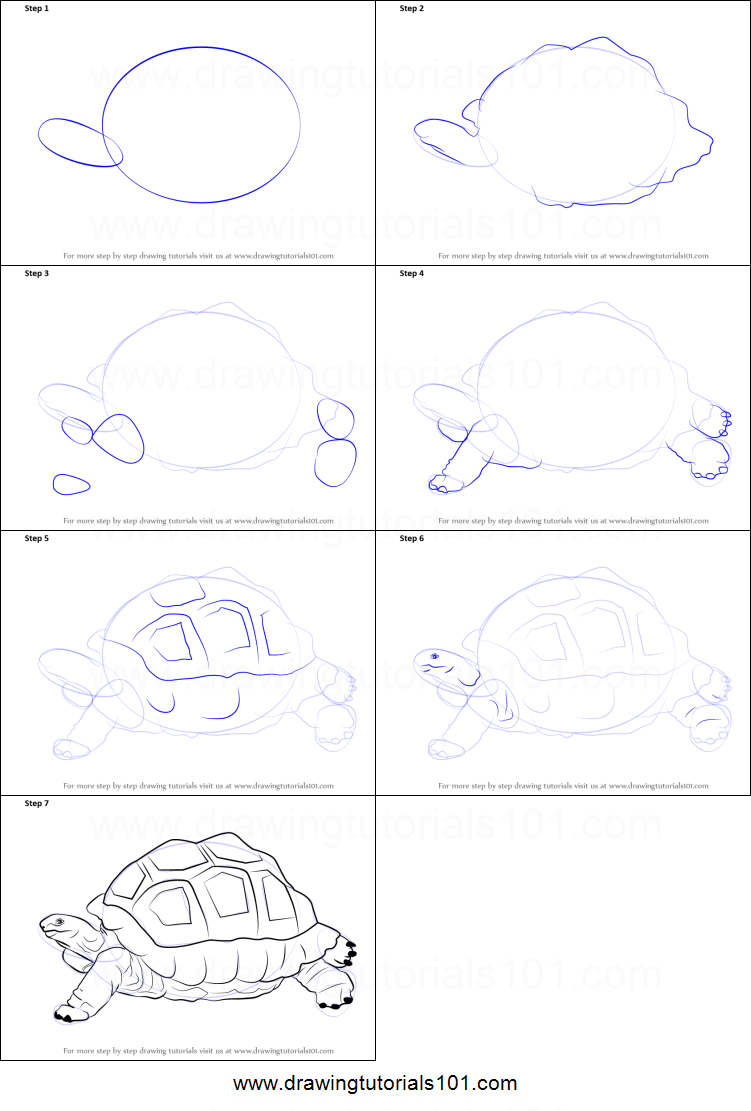 How to draw a tortoise printable step by step drawing sheet