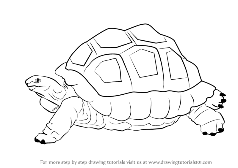 Line Drawing Zoo : Learn how to draw a tortoise zoo animals step by