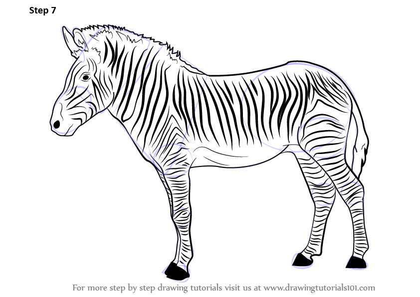 Learn How to Draw a Zebra (Zoo Animals) Step by Step ...