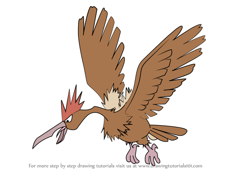 Step By Step How To Draw Fearow From Pokemon
