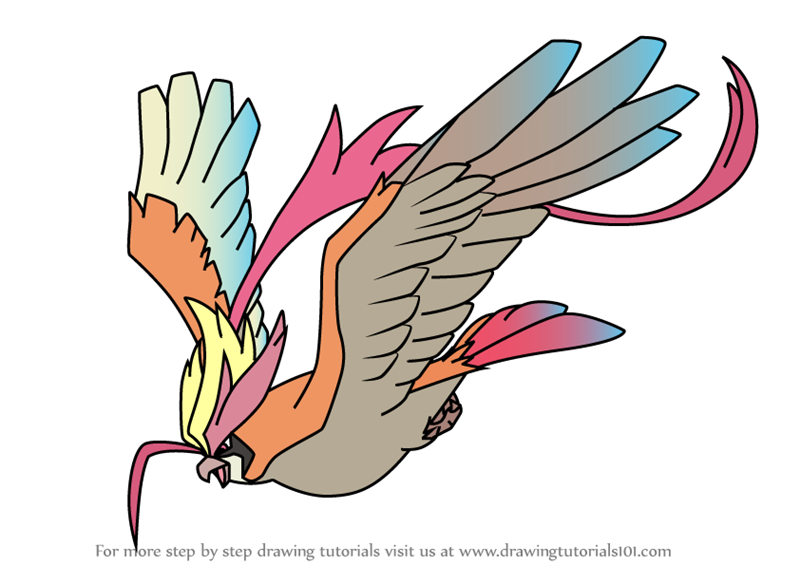 pidgeot pokemon coloring pages - photo#11
