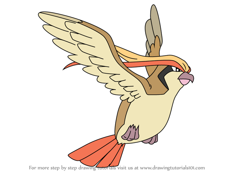 Learn how to draw pidgeot from pokemon pokemon step by for Pidgey coloring page