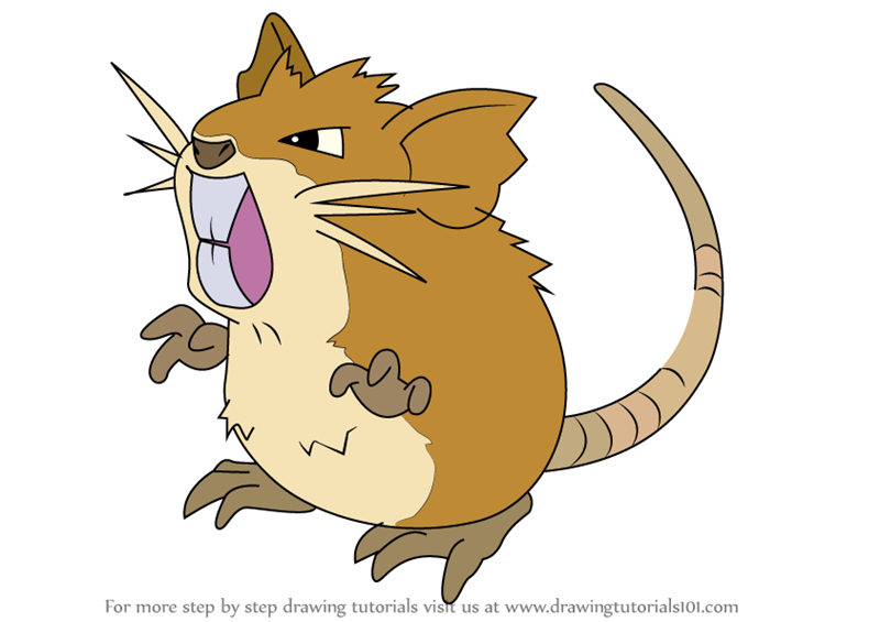 Learn How To Draw Raticate From Pokemon Pokemon Step By