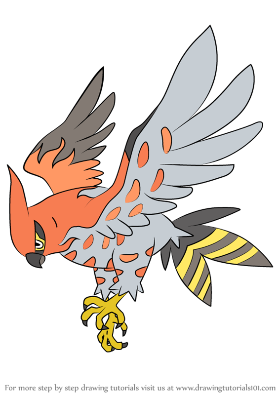 Learn How To Draw Talonflame From Pokemon Pokemon Step