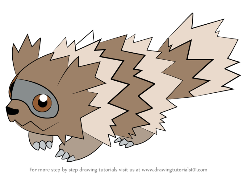 Step By Step How To Draw Zigzagoon From Pokemon