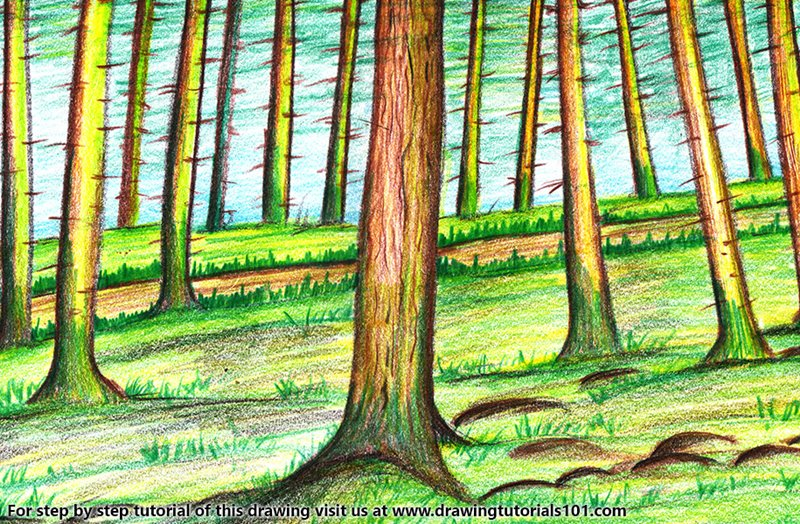 forest trees colored pencils drawing forest trees with color