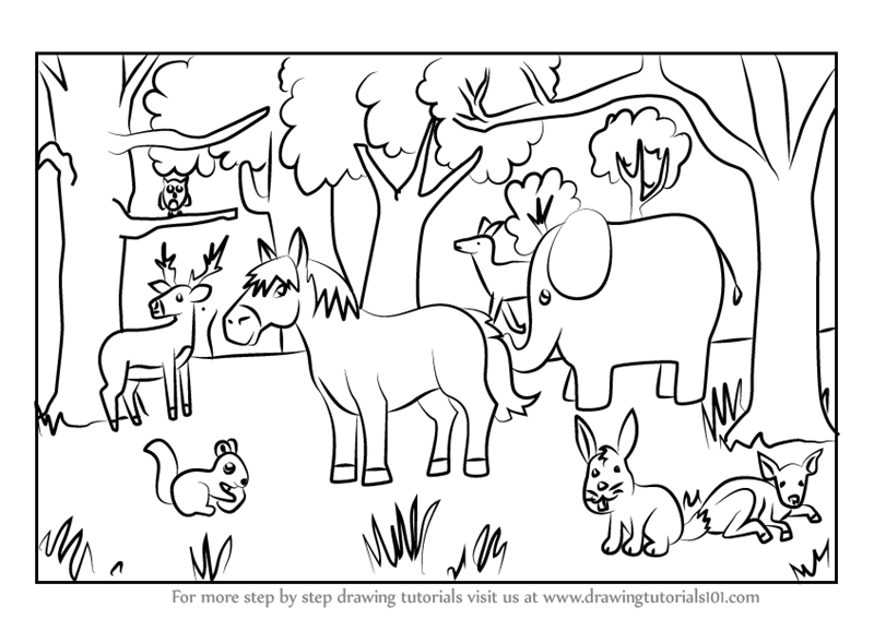 learn how to draw a forest with animals forests step by