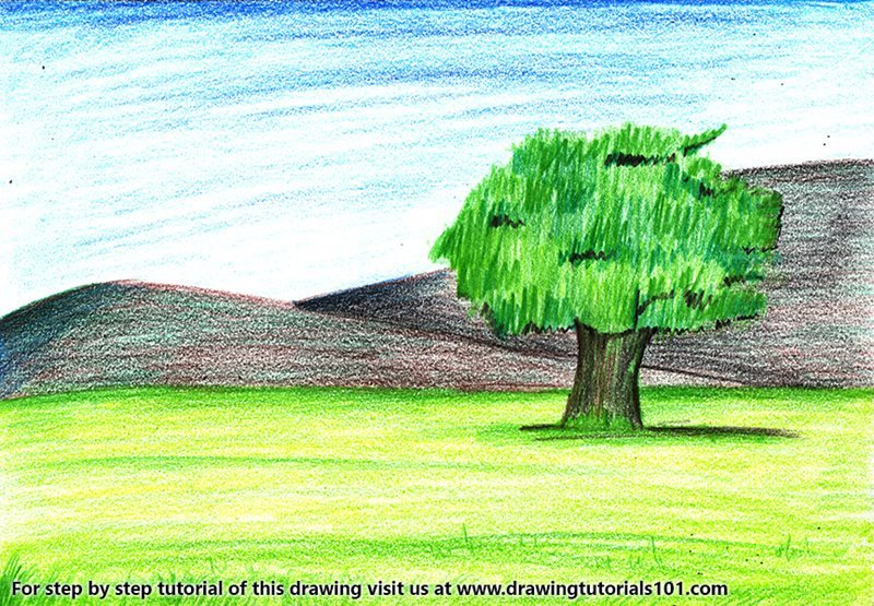 tree landscape colored pencils drawing tree landscape with color