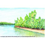How to Draw Sunderban National Park