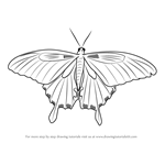 How to Draw a Decorative Butterfly