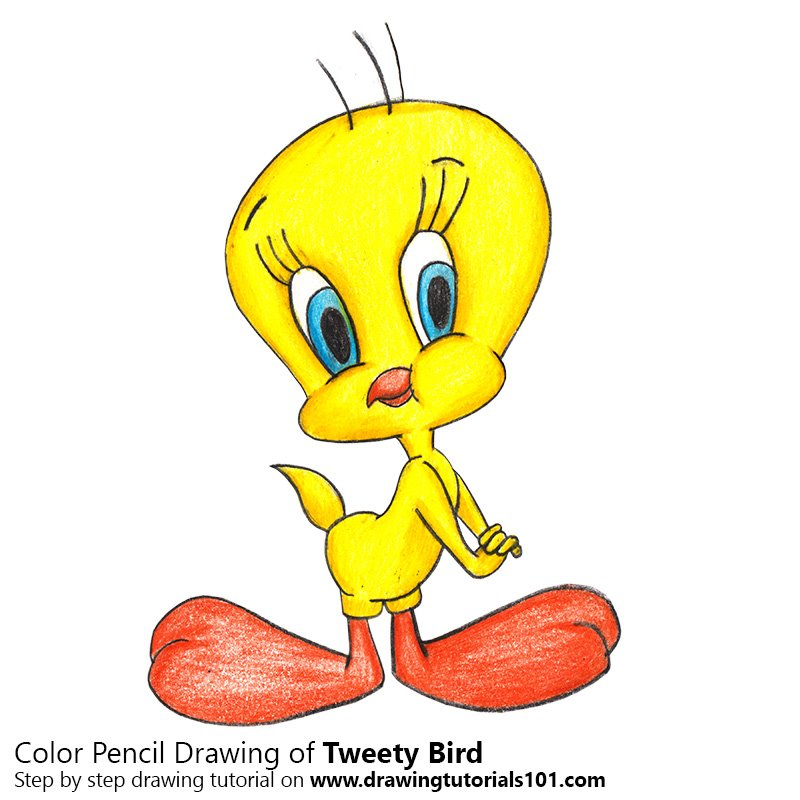 - Tweety Bird Colored Pencils - Drawing Tweety Bird With Color Pencils :  DrawingTutorials101.com