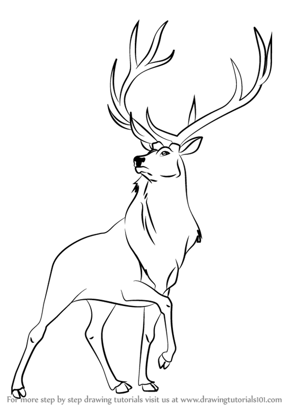 Step by step how to draw the elk from fantasia for Elk coloring pages