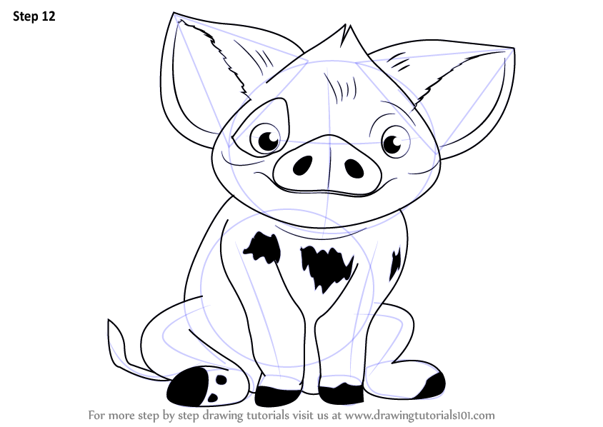 learn how to draw pua from moana moana step by step
