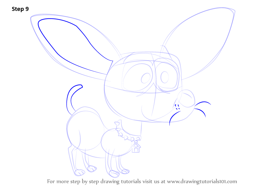 how to draw a chihuahua face step by step