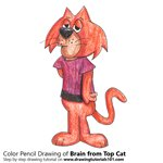 How to Draw Brain from Top Cat