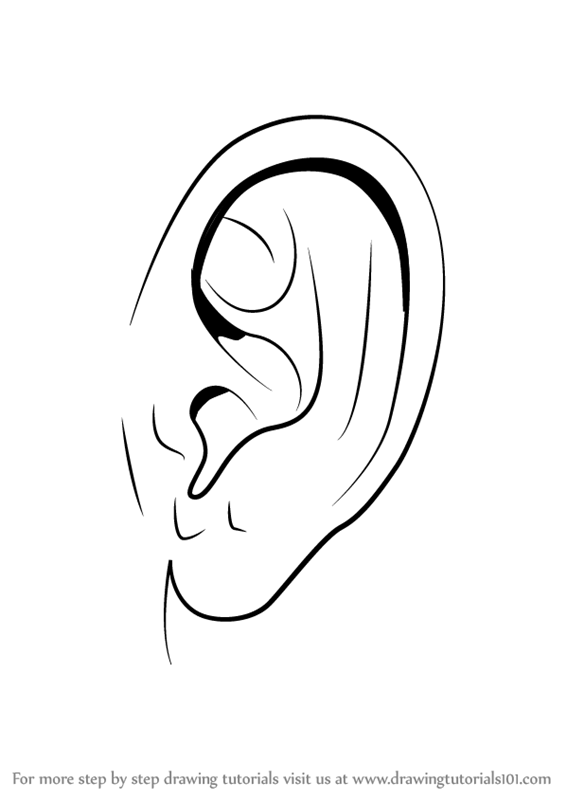 Learn How To Draw Realistic Ear With Pencils Ears Step By Step
