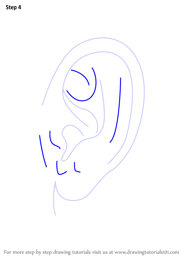 Learn How To Draw Realistic Ear With Pencils Ears Step