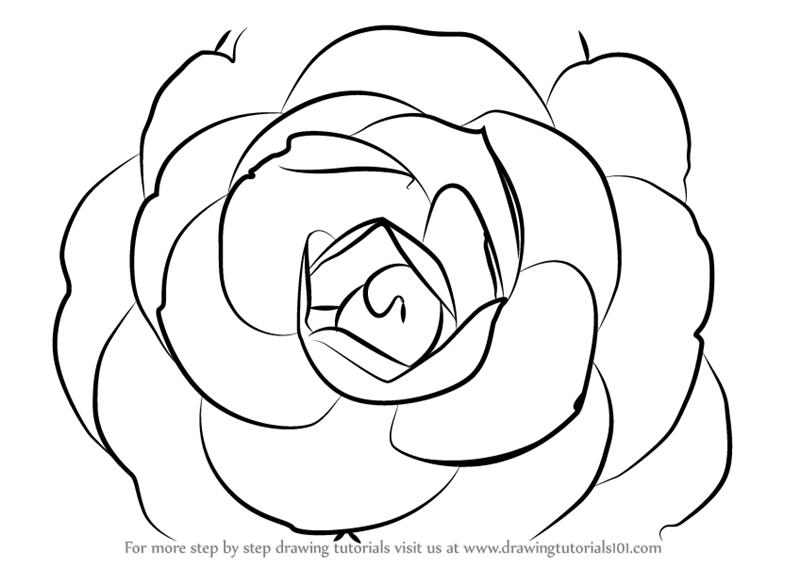 Learn how to draw a camellia flower camellia step by step how to draw a camellia flower mightylinksfo