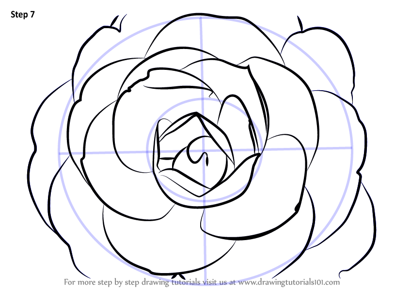 Camellia Flower Line Drawing : Camellia onica flower meaning k wallpapers