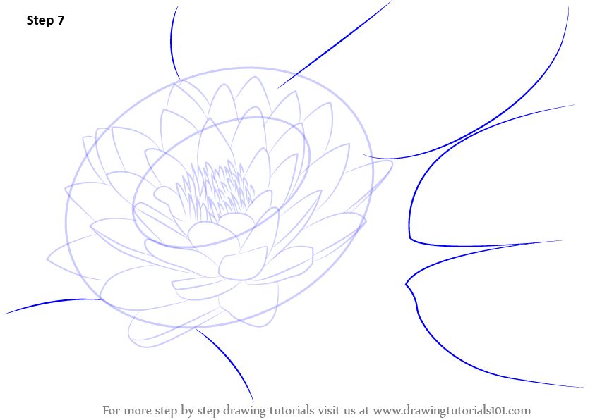Water Lily Drawings In Pencil