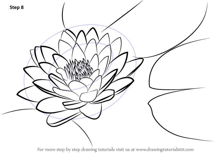 Learn How to Draw Lily Pad Lily Step by Step  Drawing Tutorials