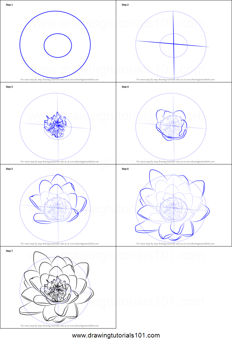 How To Draw Water Lily Flower Printable Step By Step Drawing Sheet