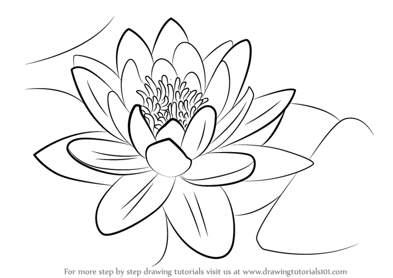 learn how to draw a water lily lily step by step drawing tutorials