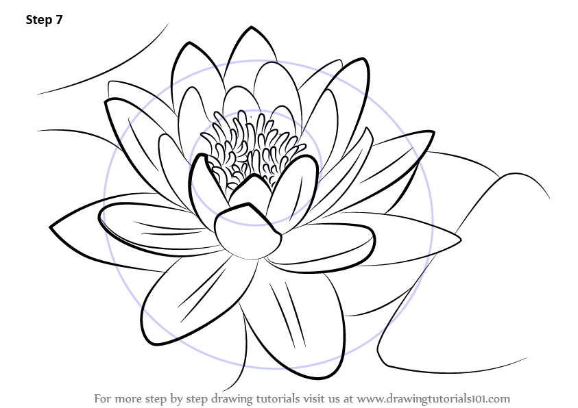 Simple Water Lily Drawing | www.imgkid.com - The Image Kid ...