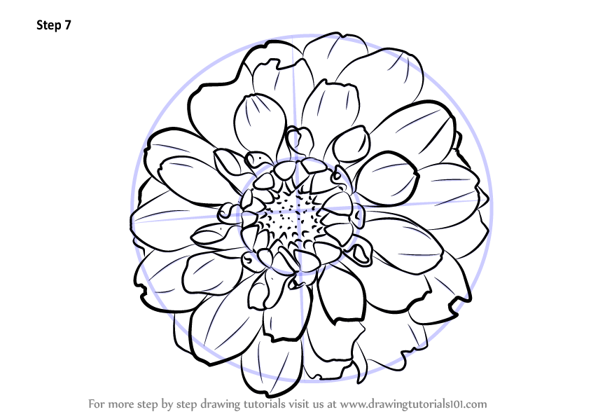 Learn How To Draw Dahlia Flower Other Flowers Step By Step