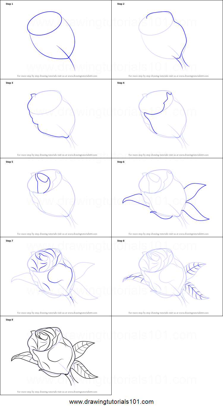 Rose Drawing Tutorial Step By Step The